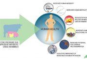مراقبت در برابر ابتلا به بیماری های حیوانی