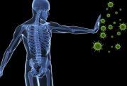 سرنخهایی پیرامون  بازسازی سیستم ایمنی بدن