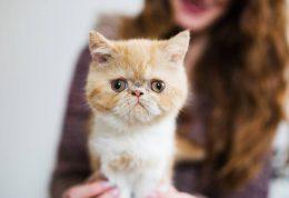 سرطان خون در گربه سانان؛ از علت تا درمان