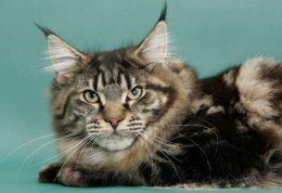 بیماری های مختلف در گربه های پیر