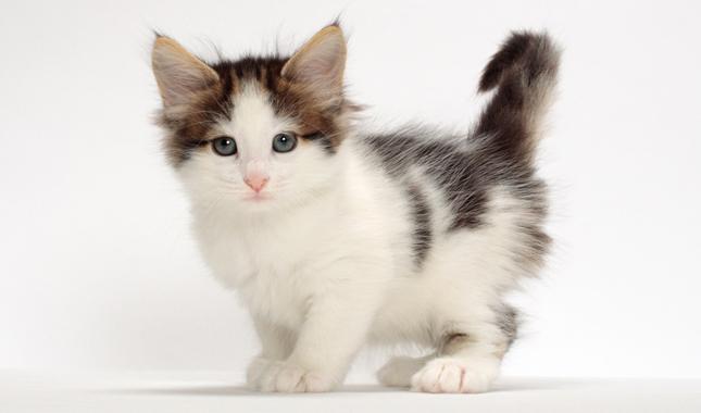 حفاظت از گربه در سنین پایین