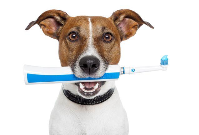 اهمیت نظافت دندان حیوان خانگی