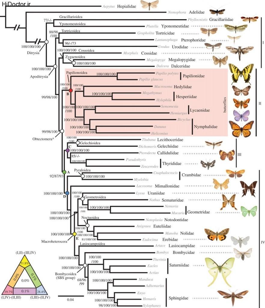 شواهد قوی  برای روابط  پروانه ها