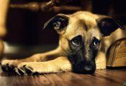 علائمی که نشان میدهد، جان سگ در خطر است