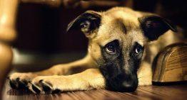 اتساع و پیچ خوردگی معده در سگ را چگونه درمان کنیم؟