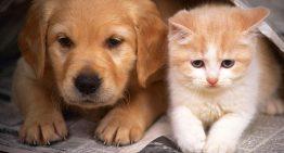 اطلاعات کامل درباره عقیم سازی سگ و گربه