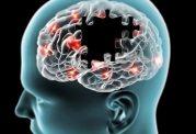 آیا چاقی بر روی پیری مغز تاثیر میگذارد؟