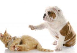 افزایش مهارتهای اجتماعی گربه