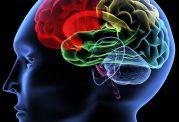 مهم ترین ارکان تقویت قوای تمرکز ذهن و فکر