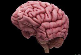 آیا بعد از زایمان، مغز دچار تغییر میشود؟!