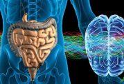 بررسی سیستم عصبی روده