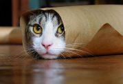 با وجود این موارد در منزل؛ جان گربه در خطر است!