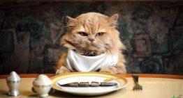 طرز تهیه 4 نوع غذای خانگی برای گربه