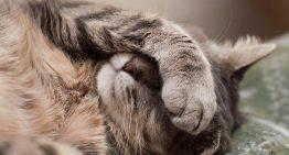 10 نکته ای که در مورد آکنه گربه ها باید بدانید!