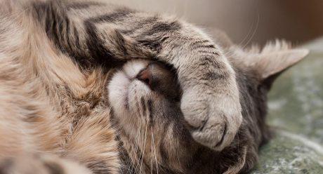 اثرات مخرب دود سیگار بر گربه های خانگی