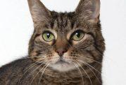 افزایش سلامت گربه با کمک تشویقی های مختلف