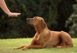با این ترفند سگ خود را نشسته نگهدارید