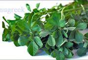 کاربردهای مختلف گیاه شنبلیله