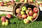 برای مبتلایان به کلسترول بالا چه میوه هایی خوب است؟