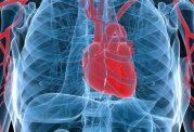 چربی این ناحیه، میتواند قلب شما را بیمار کند!