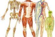 چند نکته جالب درباره بدن انسان