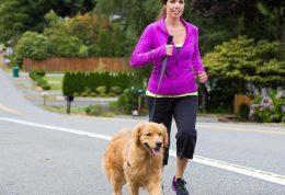 2 روش آموزشی برای هم قدم شدن سگ با صاحب