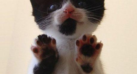 نشانه های رفتاری برای مشکلات تیروئید گربه