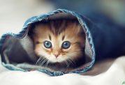 حرف حساب گربه ها با انسان ها چیست؟