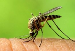 مراقب ویروس خطرناک زیکا باشید