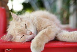 ارتباط وزن با امراض مختلف در گربه ها