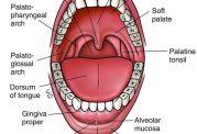 بررسی انواع قارچ در دهان