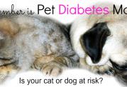 دیابت در میان حیوانات خانگی