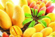 غنی ترین منبع ویتامین ها