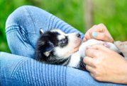 حفظ و نگهداری از توله سگ در خانه