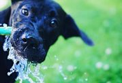 روزانه چقدر به توله سگ آب بدهیم؟