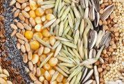 این دانههای جهان خیلی مفیدند