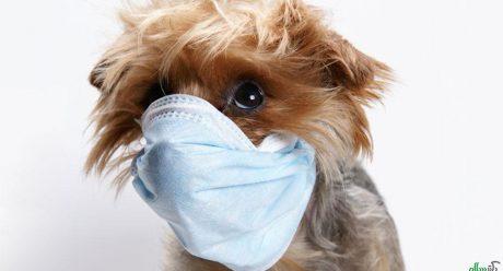 نگاهی اجمالی به بیماری دیستمپر در سگ سانان