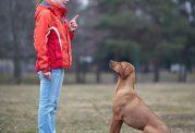 """چند روش متفاوت برای آموزش """"بشین"""" به سگ"""