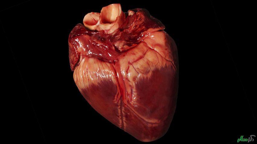 راز و رمزهای قلب انسان