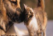 نادر ترین پدیده دنیا، سه گربه از یک سگ متولد شدند!