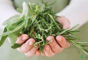 معجزه گیاهان بر روی پوست و مو