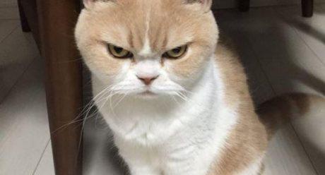 چگونه از یک گربه در خانه نگهداری کنیم ؟