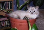 بازیگوشی گربه در محیط خانه