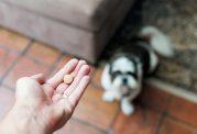 توصیه های دامپزشکی برای دارو دادن به حیوان خانگی