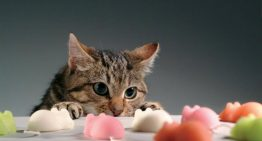 اجتماعی شدن بچه گربه