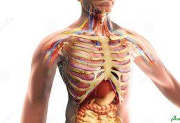 بدن انسان چه موقع درخواست کمک میکند؟
