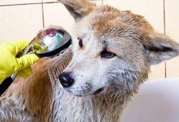 شستن حیوانات خانگی