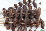 آیا حشرات غذای آینده ما هستند؟