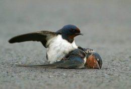 از پرندگان مرده دوری کنید