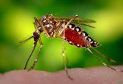 پشه می تواند دو ویروس را همزمان انتقال دهد